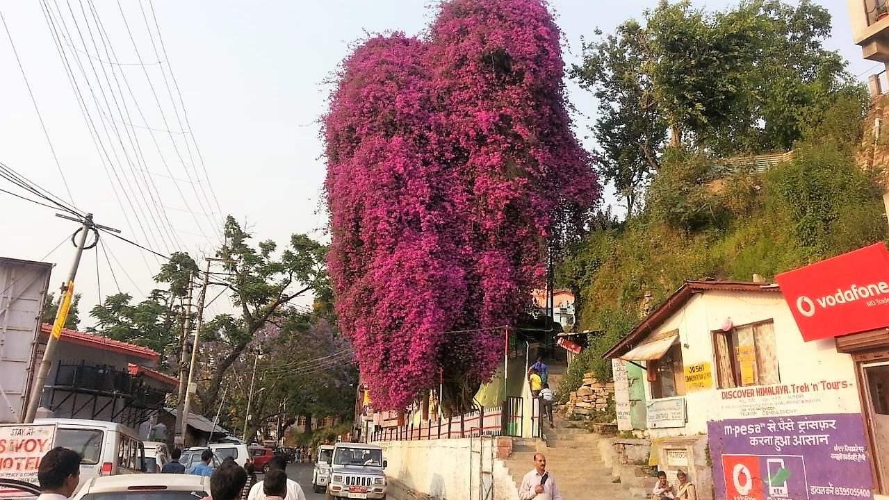 bogenwalia