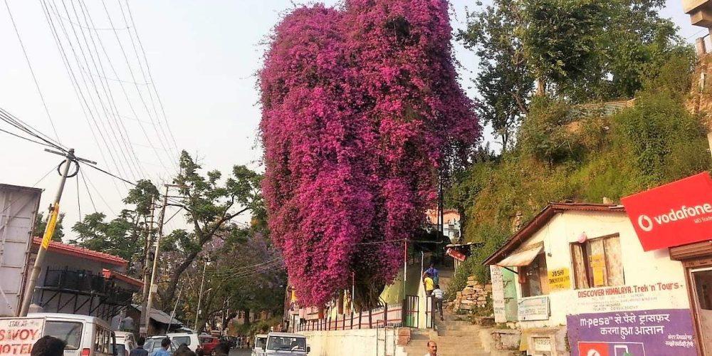 मैं हूँ इस पेड़ का गवाह नंबर एक