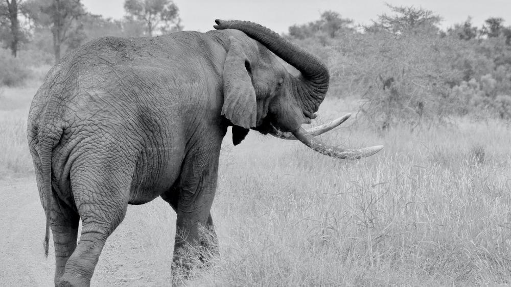 elephant in forest wildlife
