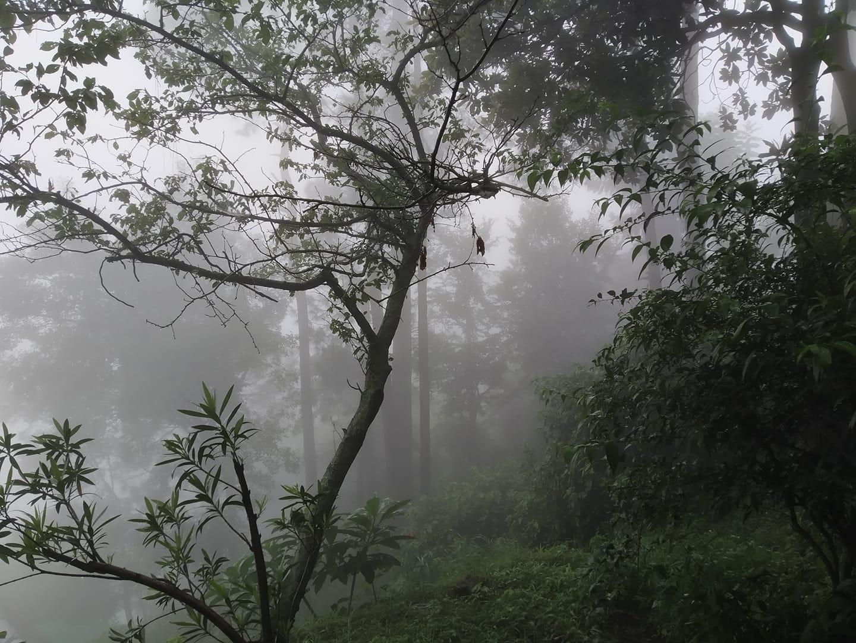 mist-almora